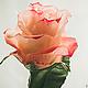 Роза,розы,розы ручной работы,розы из полимерной глины,керамическая флористика