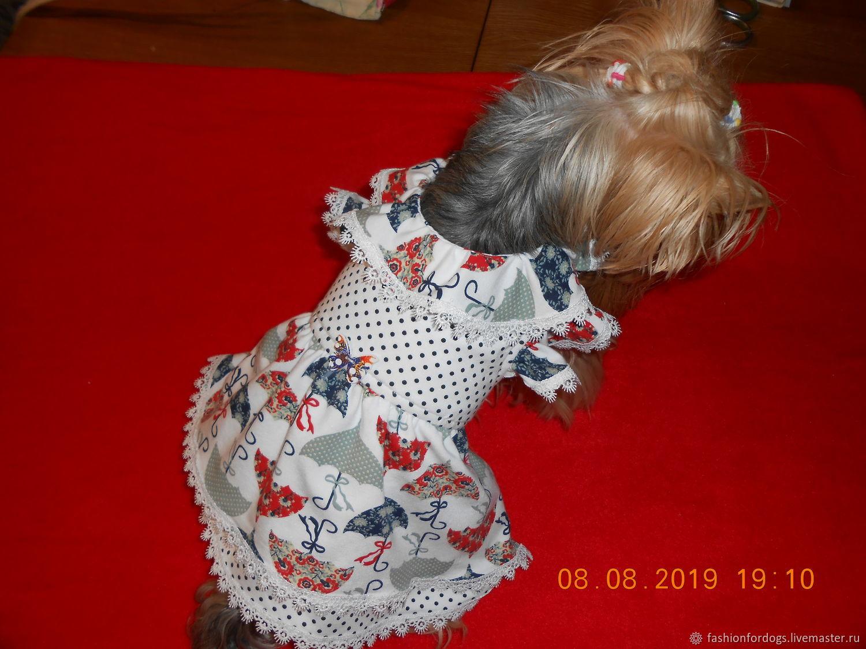Платье разноцветные зонтики, Одежда для кошек, Долгопрудный, Фото №1
