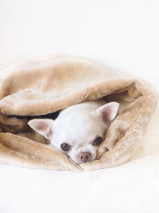 Аксессуары для собак, ручной работы. Ярмарка Мастеров - ручная работа. Купить Спальный Мешок Латте. Handmade. Бежевый, латте, коричневый