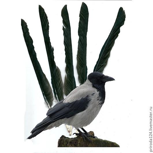 Внимание! ВорОна - это не жена вОрона! Это ДРУГАЯ птица!