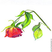 Картины и панно ручной работы. Ярмарка Мастеров - ручная работа Картина Зимняя розочка, красный зеленый роза рисунок. Handmade.