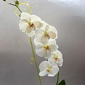 """Орхидея """"Фаленопсис"""" Только самовывоз!"""