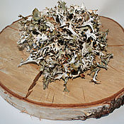 handmade. Livemaster - original item Icelandic moss (Cetraria Icelandic).. Handmade.