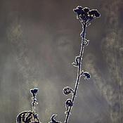 Картины и панно ручной работы. Ярмарка Мастеров - ручная работа Фотокартина.ЗИМНИЙ ЦВЕТОК. Handmade.