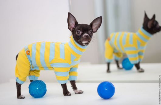 Одежда для собак, ручной работы. Ярмарка Мастеров - ручная работа. Купить Комбинезон полосатый. Handmade. Голубой, одежда для собак, трикотаж