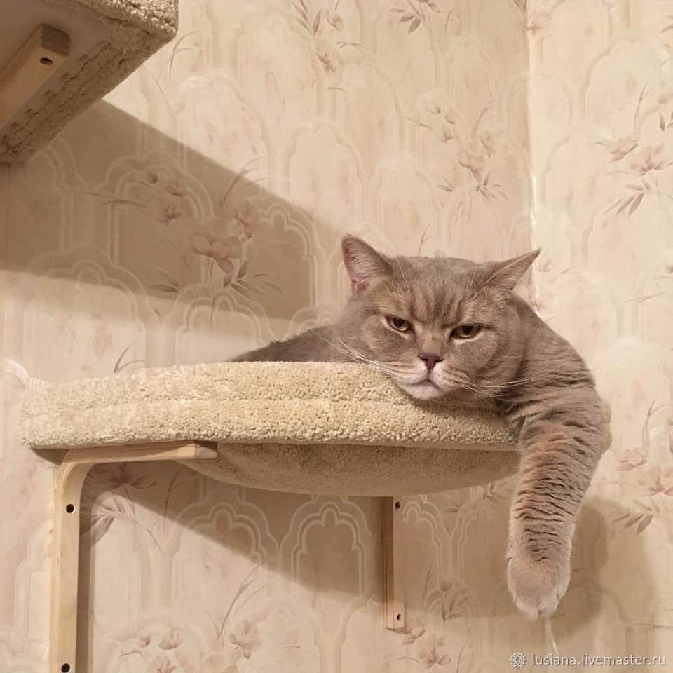Аксессуары для кошек, ручной работы. Ярмарка Мастеров - ручная работа. Купить Настенный гамак для кошек и собак купить. Заказать в нужном цвете. Handmade.