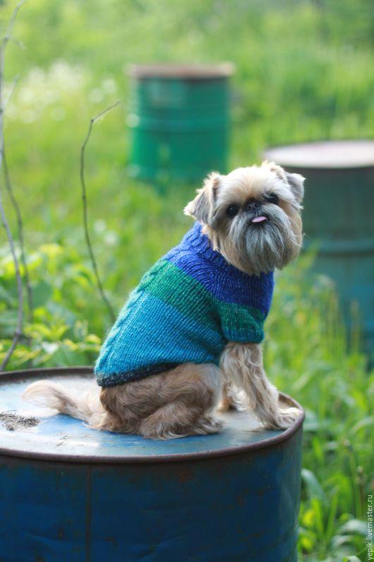 Одежда для собак, ручной работы. Ярмарка Мастеров - ручная работа. Купить свитер для собаки. Handmade. Комбинированный, одежда для животных