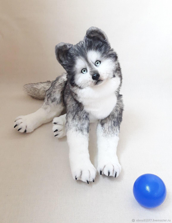 Teddy a Husky puppy, Teddy Toys, Zheleznodorozhny,  Фото №1
