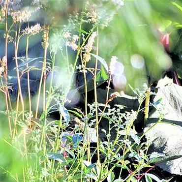 """Картины и панно ручной работы. Ярмарка Мастеров - ручная работа Набор фоторабот  """"Ах, лето.... Handmade."""