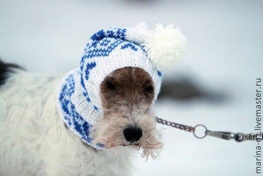 Одежда для собак, ручной работы. Ярмарка Мастеров - ручная работа. Купить шапка для собаки. Handmade. Синий, шапка для собаки