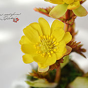 Цветы и флористика handmade. Livemaster - original item Amur Adonis, Adonis. Handmade.