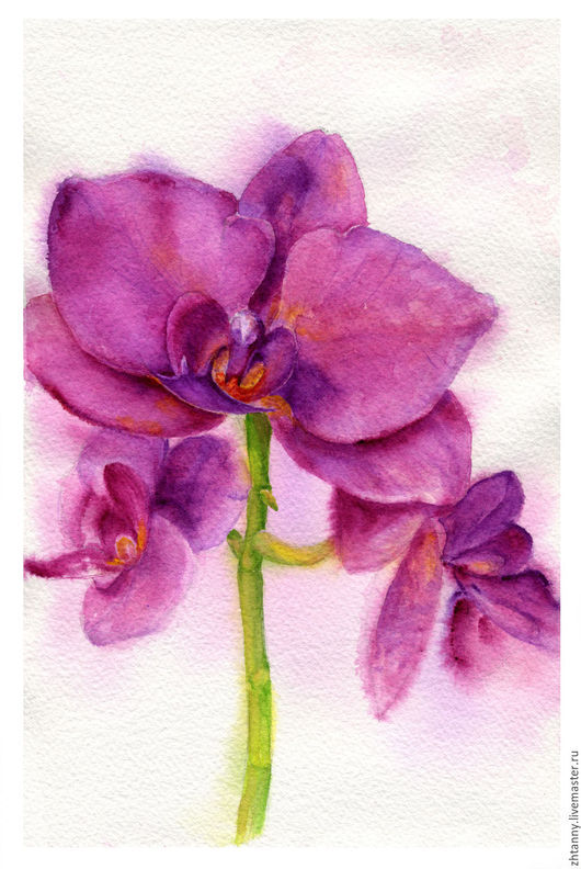 `Ароматная орхидея`, Акварель. Автор: Желтышева Татьяна