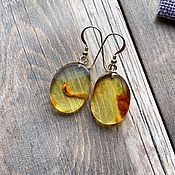 Украшения handmade. Livemaster - original item Amber. Earrings made of natural amber.. Handmade.