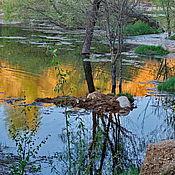 Картины и панно ручной работы. Ярмарка Мастеров - ручная работа Фотокартина Золотое озеро 20х30. Handmade.