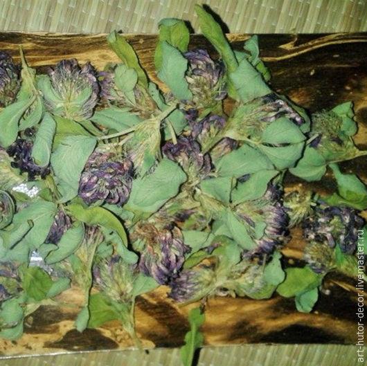 Где купить клевер луговой цветы купитьцветы оптом от российских производителей