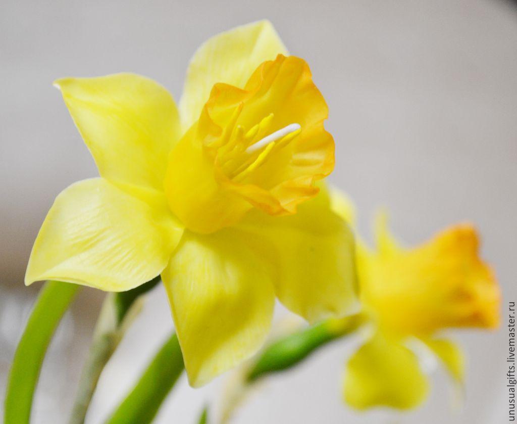 Подарок цветок нарцисс 88