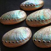 Материалы для творчества handmade. Livemaster - original item Shell Abalone Haliotis Glabra. Handmade.