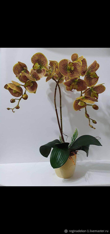 Цветок орхидеи, Цветы, Астрахань,  Фото №1