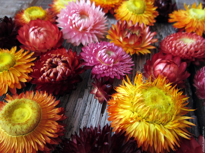 How to scrapbook dried flowers - Florist Supplies Handmade Livemaster Handmade Buy Helichrysum Dried Flowers Burgundy