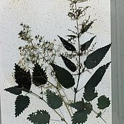 Картины и панно handmade. Livemaster - original item Herbarium in a vintage picture frame dried flowers and metal frame. Handmade.
