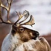 Материалы для творчества handmade. Livemaster - original item Copy of Fur flap skins Reindeer. Handmade.