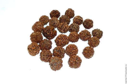 Индийский орех Рудракша, диаметр бусин от 9 до 20 мм. Бусины подойдут для изготовления украшений, четок, бус, браслетов и серёг.