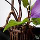 Интерьерные композиции ручной работы. Король вьющихся растений..... Landora (Galitn). Ярмарка Мастеров. Авторская ручная работа, экибана