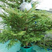 Для дома и интерьера handmade. Livemaster - original item Christmas tree stand. Handmade.