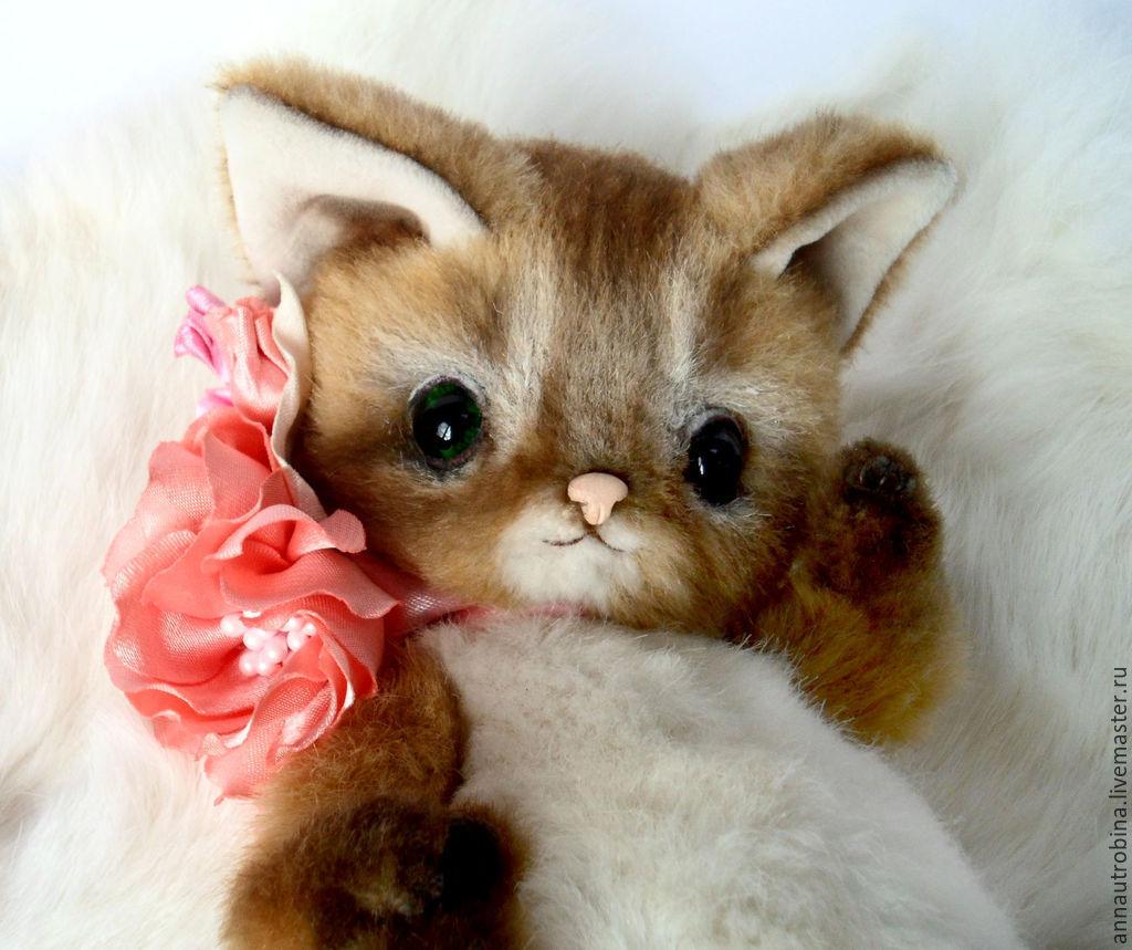 Cat Somali: photo. Somali cat: character, reviews