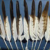 Материалы для творчества ручной работы. Ярмарка Мастеров - ручная работа Перья орла маховые 28-32см. Handmade.