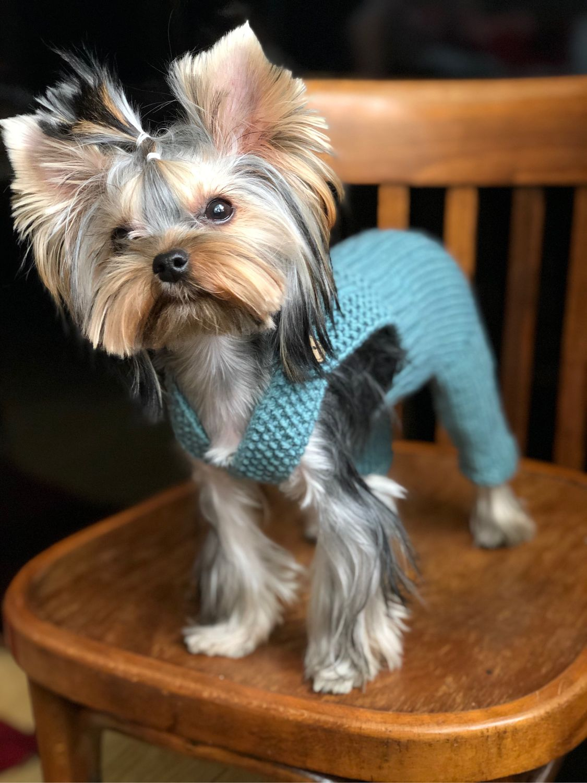 Штанишки для собаки, Одежда для питомцев, Рыбинск,  Фото №1