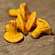 """Для украшений ручной работы. Ярмарка Мастеров - ручная работа. Купить Бусины """"Лисички"""". Handmade. Оранжевый, стеклянные бусины"""