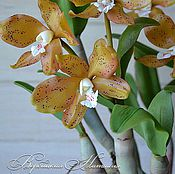 Цветы и флористика ручной работы. Ярмарка Мастеров - ручная работа Орхидея холодный фарфор каттлея красивые цветы. Handmade.