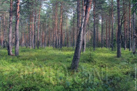 Фотокартины ручной работы. Ярмарка Мастеров - ручная работа. Купить Сказочный Лес. Handmade. Фотокартина, лес, красивая фотография
