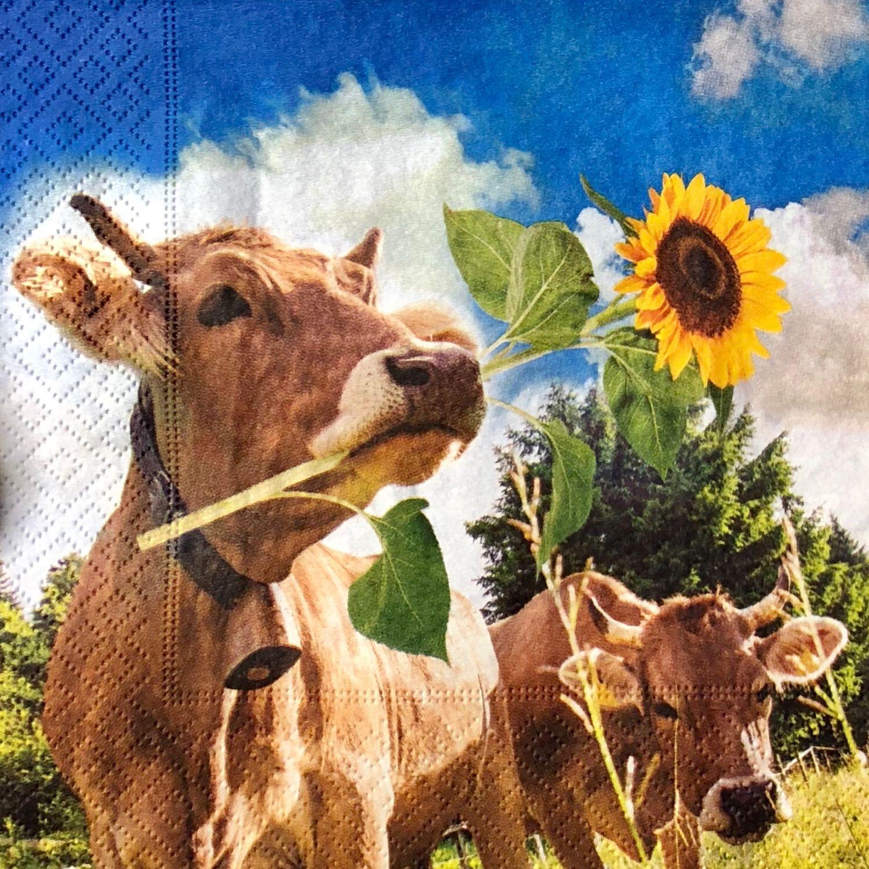 картинки корова с цветком бы, разве можно