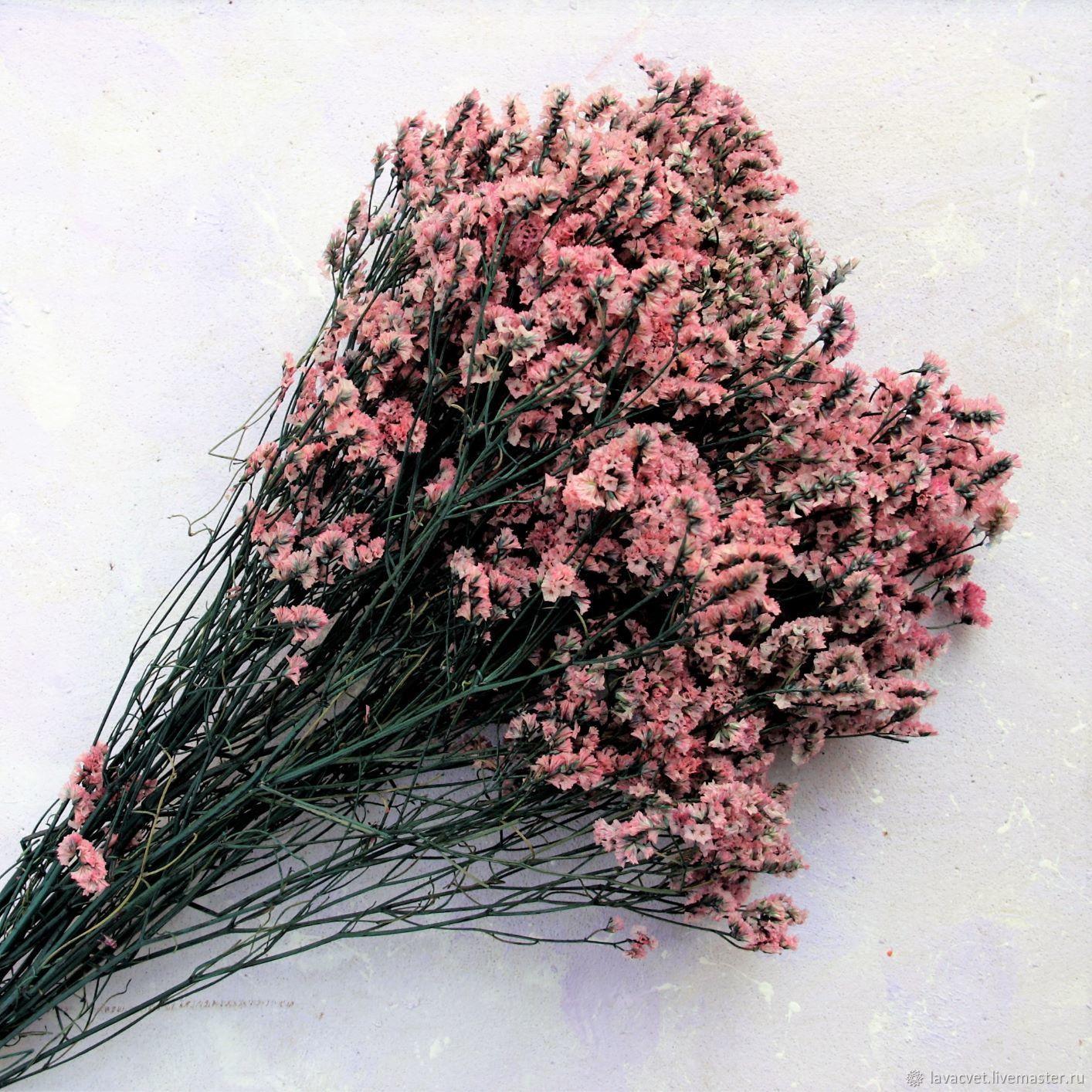 Лимониум стабилизированный ярко-розовый, Растения, Москва,  Фото №1