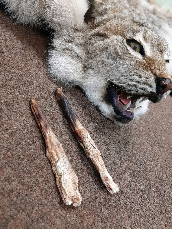 сажаю бакулюм волка фото ретро