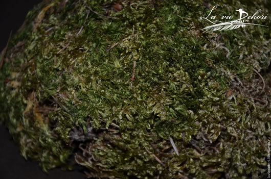 Материалы для флористики ручной работы. Ярмарка Мастеров - ручная работа. Купить Болотный мох. Handmade. Мох, зеленый, мох болотный