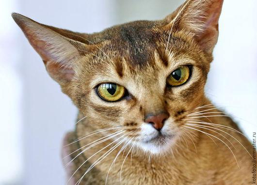 Фотокартины ручной работы. Ярмарка Мастеров - ручная работа. Купить Абиссинские котята. Handmade. Котята, пенокартон