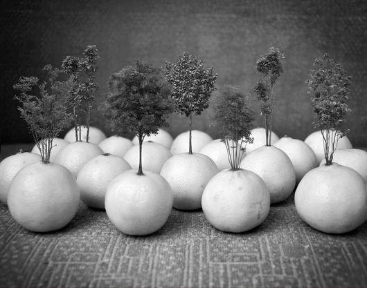 """Фотокартины ручной работы. Ярмарка Мастеров - ручная работа. Купить Фотокартина """"Апельсиновая роща"""". Handmade. Апельсины, дерево, коллаж, фотокартина"""