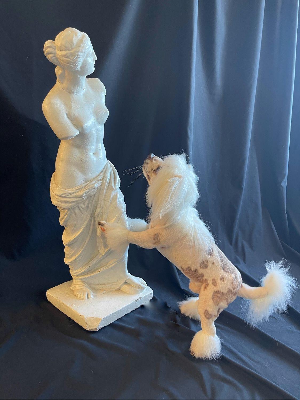 Китайская хохлатая (стильный друг ), Мягкие игрушки, Тверь,  Фото №1