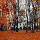 Фотокартины ручной работы. Ярмарка Мастеров - ручная работа. Купить Фотокартина Осень. Handmade. Оранжевый, подарки ручной работы, осень