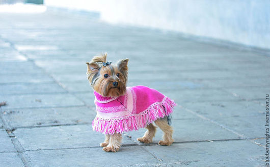 """Одежда для собак, ручной работы. Ярмарка Мастеров - ручная работа. Купить Пончо для маленькой собачки """" Люси """". Handmade."""