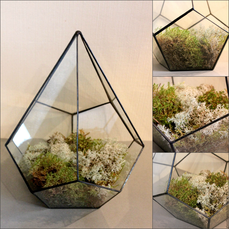 Комнатные растения фото с названиями мелкие цветы
