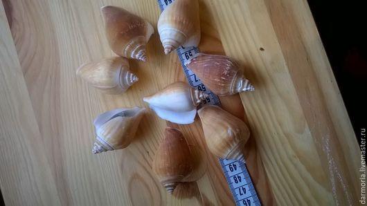 Материалы для флористики ручной работы. Ярмарка Мастеров - ручная работа. Купить Ракушки морские (03-025),(05-046) Стромбус канариум. Handmade.
