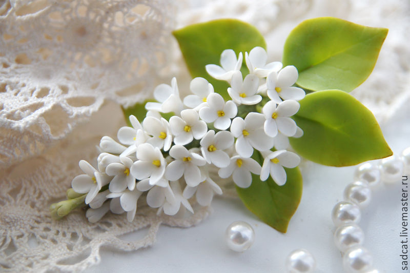 Цветы цветы купить белую сирень конфет