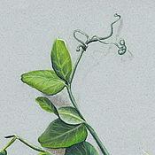 Картины и панно ручной работы. Ярмарка Мастеров - ручная работа Картина пастелью Зеленый горошек 2. Handmade.