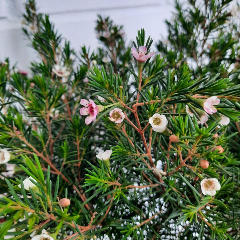 Горшечные цветы.Комнатные растения.Цветы в горшках ...