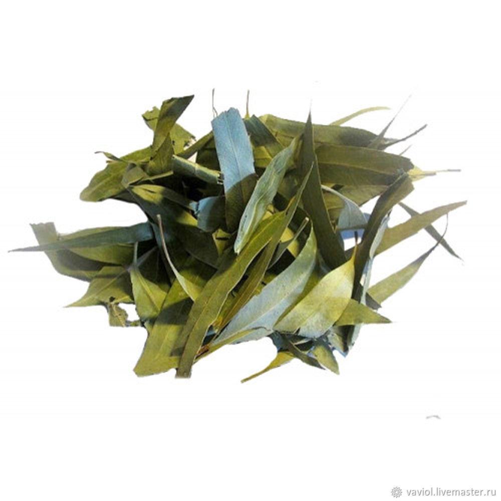 Эвкалипт (лист), Растения, Кызыл,  Фото №1