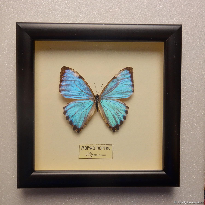 Бабочка Морфо (Морфо Портис) в рамке, Бабочки, Москва,  Фото №1